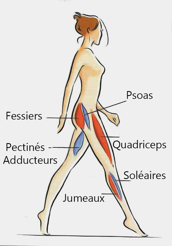 Shéma Muscles Profond Femmes