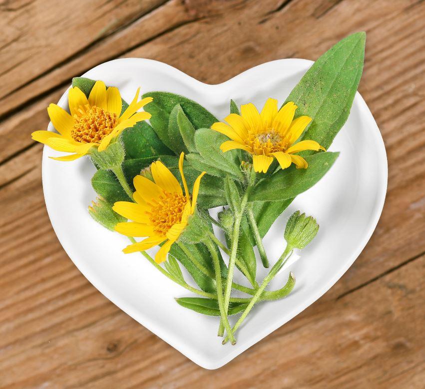 Fleur D'arnica Lutter Poux