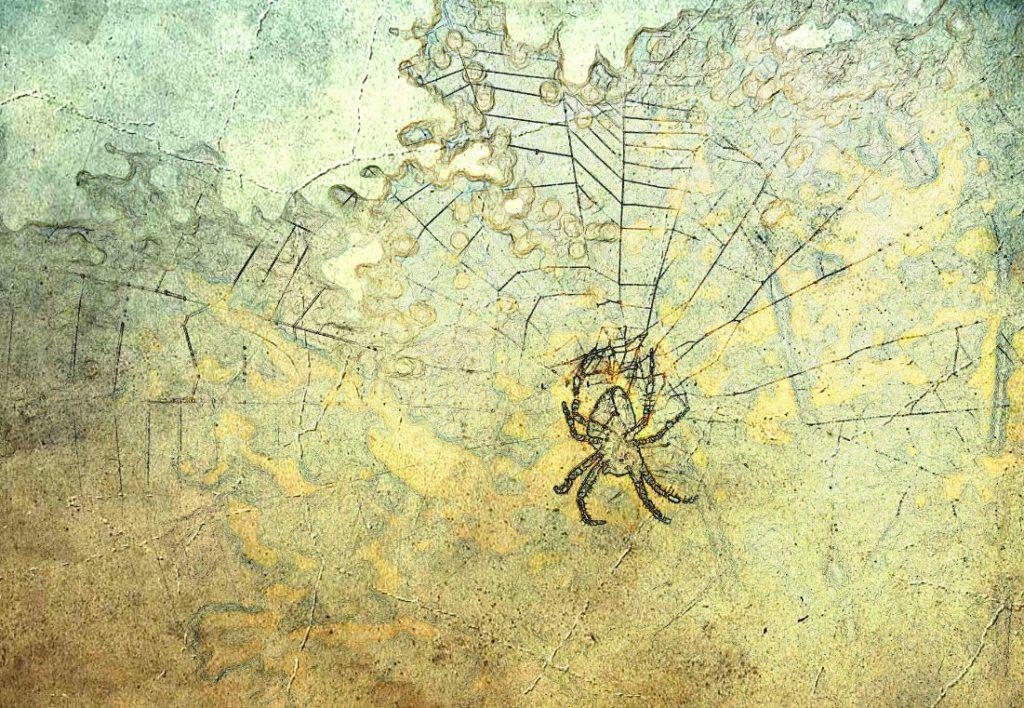 Araignée Rêve