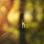 Rêver D'araignée