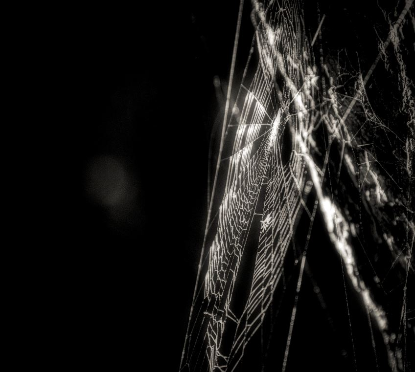 Rêver Toile Araignée
