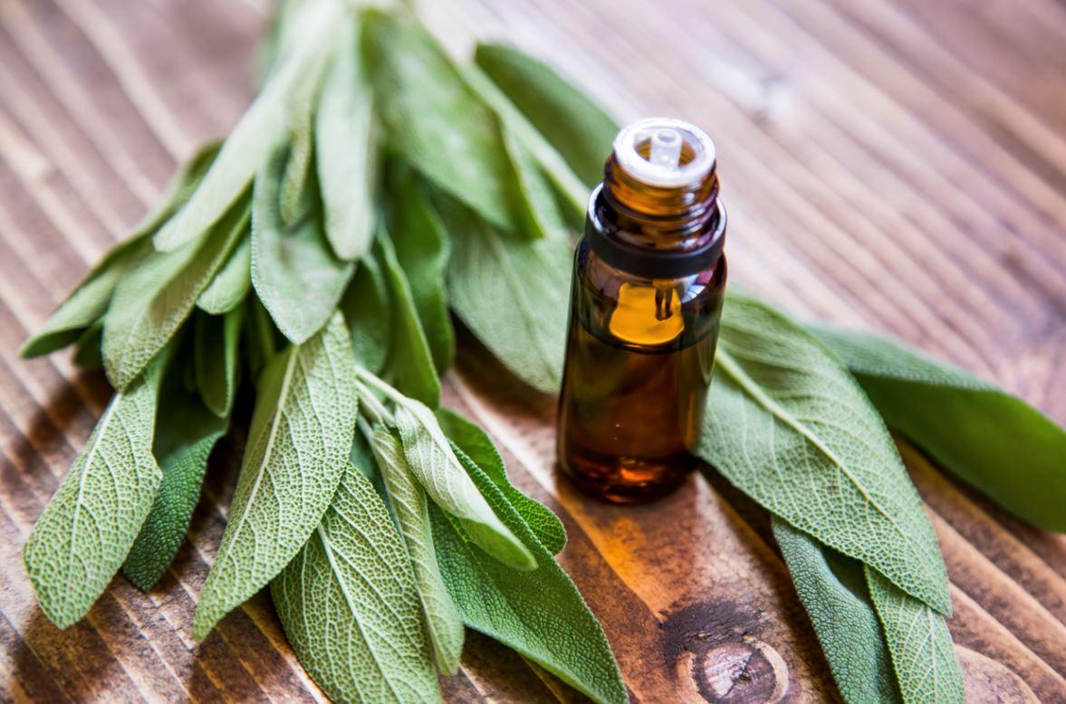 Sauge Plante Anti Fatigue