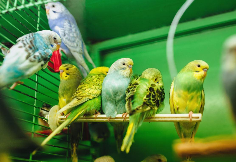 Acheter Oiseau