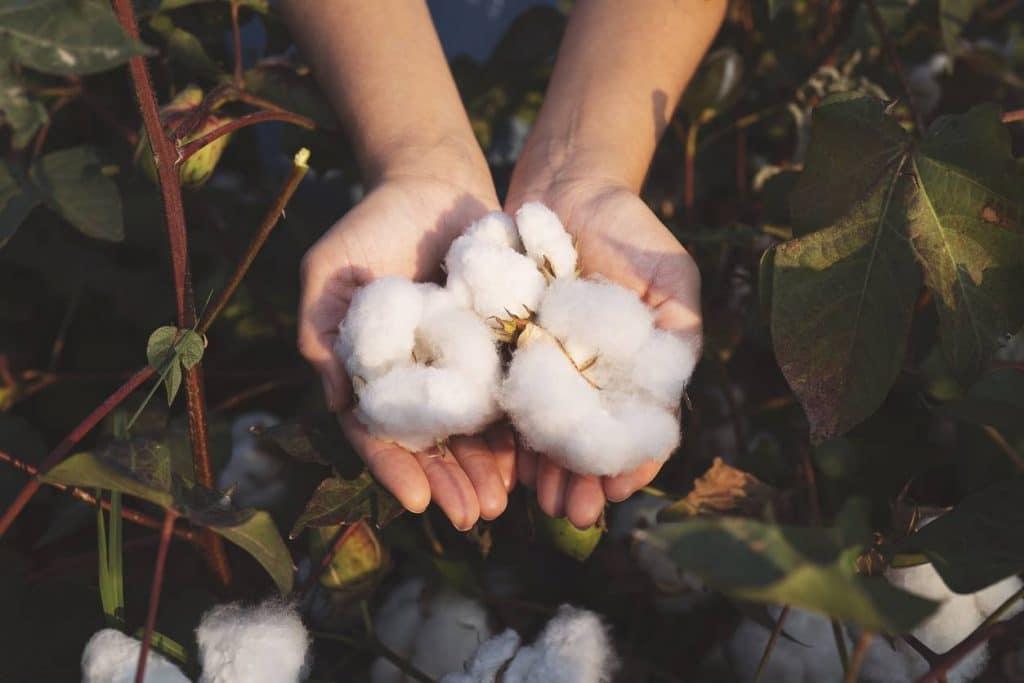 coton bio tissu écologique